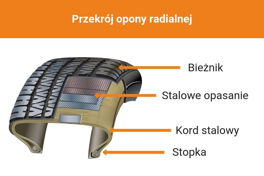 Przekrój opony radialnej